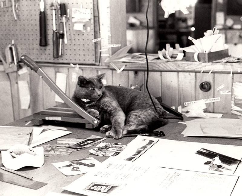 The cat working at the newspaper in Madrid, NM